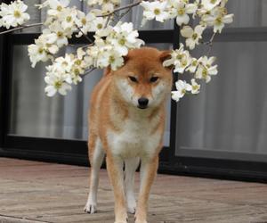 animal, dog, and grunge image