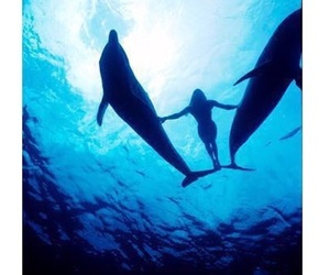 dolphins and candice image