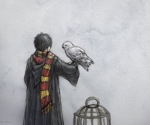 harry potter and harry image