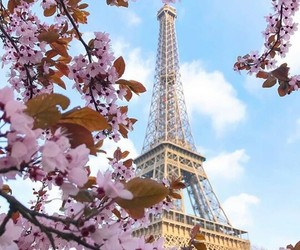 aesthetic, cherry blossom, and traveling image