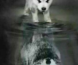 dog, wolf, and quotes image