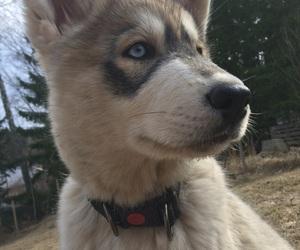 adorable, animal, and beautiful image