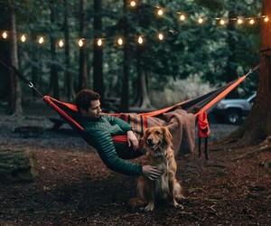 dog, lights, and nature image
