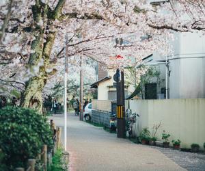 city, japan, and tree image
