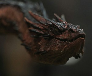 lord of the rings, the hobbit, and the desolation of smaug image