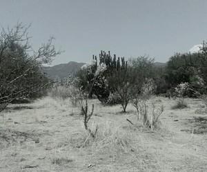 Image by Sinai