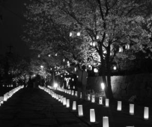 cherry blossoms, walkway, and lanterns image