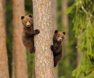 bear, nature, and animal image