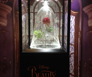 red rose, rose, and beauty and the beast rose image