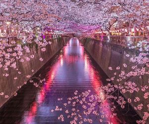 flowers, romantic, and japan image