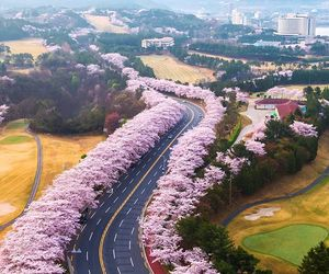 beautiful, flowers, and korea image