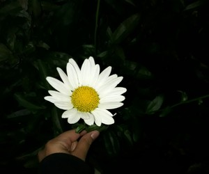 flowers and life image
