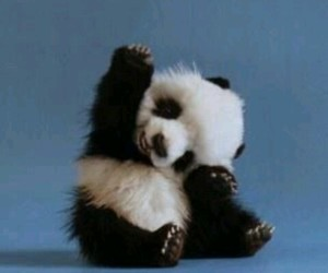 black and white, cute, and panda image
