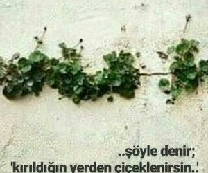 instagram, my post, and türkçe sözler image