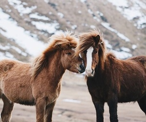 horses, iceland, and cute image