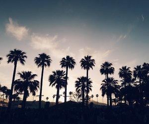 palms and coachella image