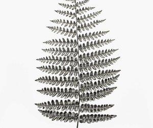 art, fern, and ferns image