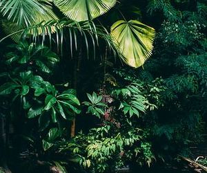 forest, tropical, and green image