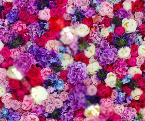 colourful, flowers, and wallpaper image