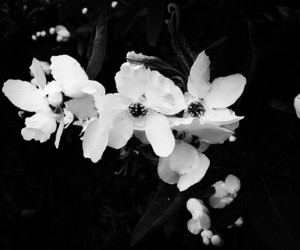 black, flowers, and nature image