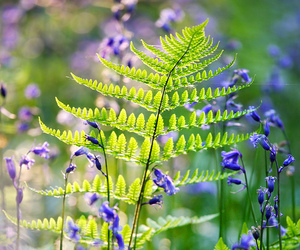 flowers, green, and nature image