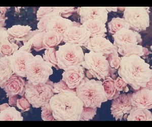 roses, background, and beautiful image