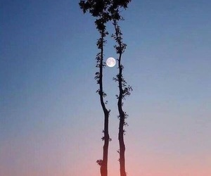 moon, sun, and nature image