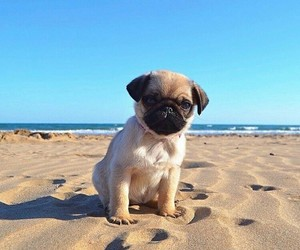 dog, puppy, and pug image