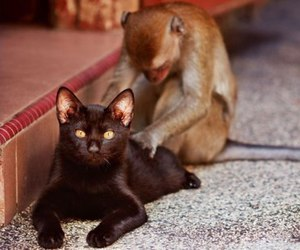 cat, monkey, and animal image
