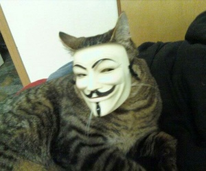 cat, mask, and funny image