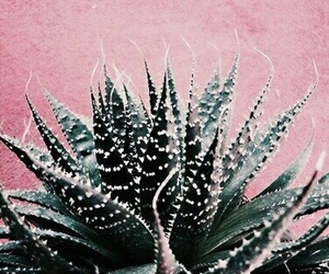 pink, teal, and plants image