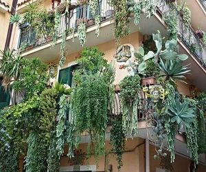 apartment, forest, and succulents image