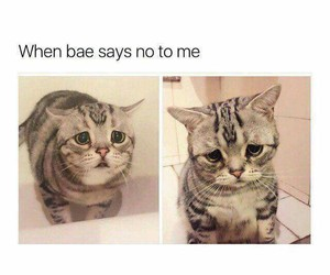 cat, cute, and bae image