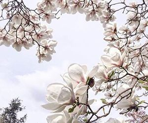 flowers, spring, and magnolia image