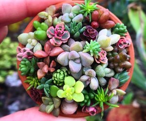 plants, succulent, and succulents image