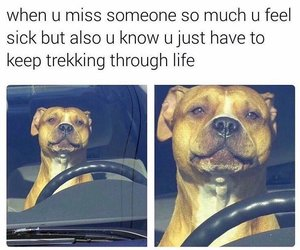dogs, funny, and memes image