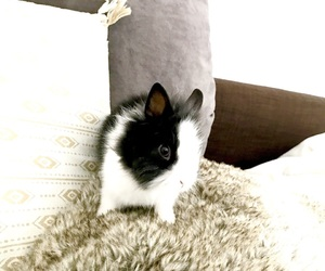 cocooning, rabbit, and hygge image