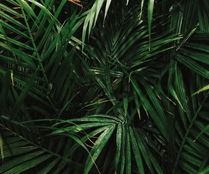 green, nature, and tropical image