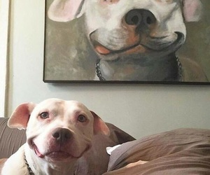 dog, smile, and animal image