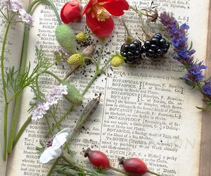 books and spring image