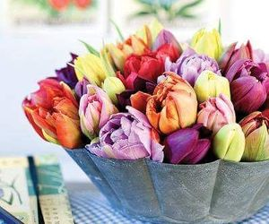 colorul, flowers, and tulips image