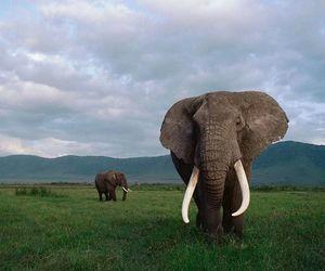 elephant, nature, and africa image
