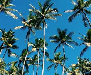 tropical, summer, and beach image