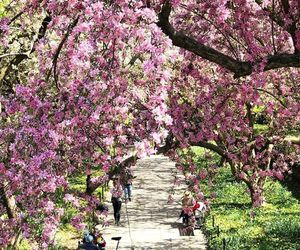 new york and spring image