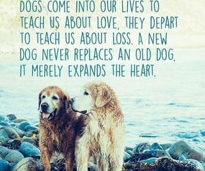 dog, quotes, and friends image