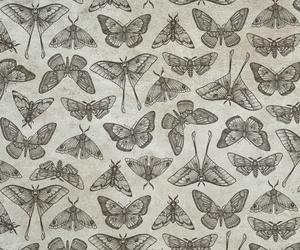 butterfly, illustration, and pattern image