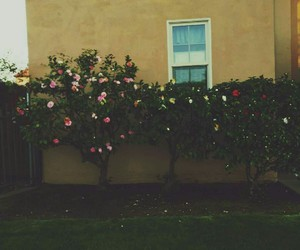 aesthetic, flowers, and pretty image