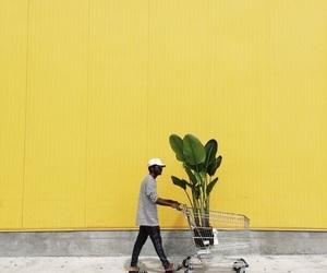 yellow, plants, and aesthetic image