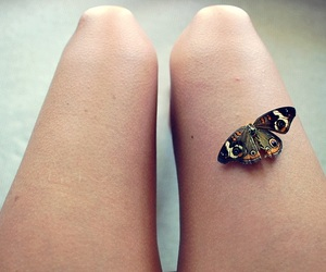 butterfly, legs, and photography image