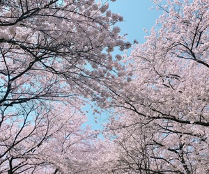 bts, pink, and tree image